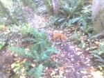 bella-in-the-woods-027